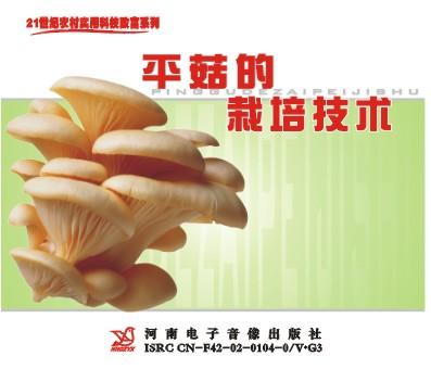 平菇的栽培技术